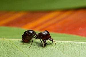 Ant on a leaf photo