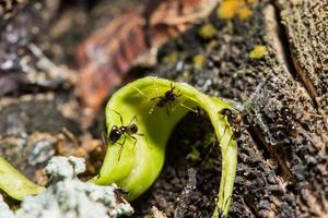 Ants on a tree, close-up photo