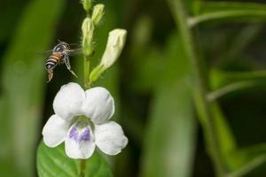 abeja volando en una flor foto