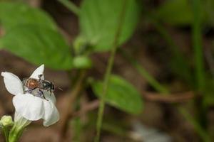 abeja en una flor foto