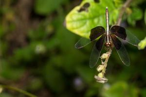 Black dragonfly on a flower photo