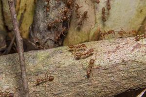Ants on a tree, close-up