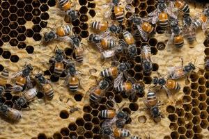 Bees on the beehive