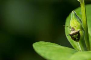 Hemiptera on a flower
