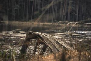 pasarela antigua en un lago foto
