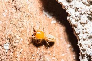 Termite on a log