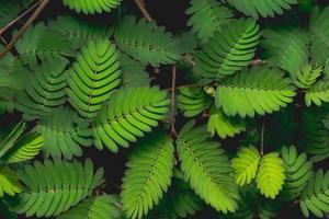 fondo verde natural