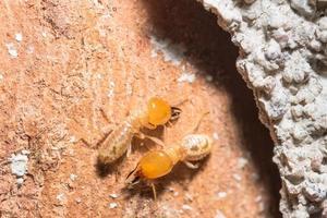Termites on a log