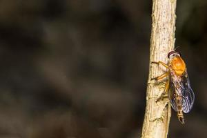 Robberfly on a branch