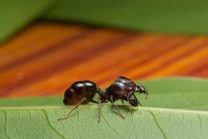 Ant on a leaf, close-up