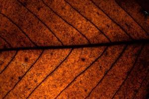 Brown dry leaf photo