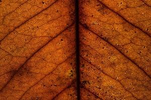 Background pattern of a leaf photo