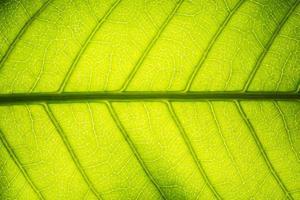 Leaf pattern background photo