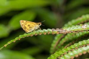 Butterfly on a leaf photo