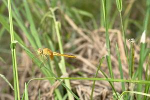 Dragonfly on grass photo