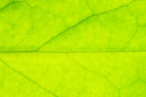 Texture of leaf photo