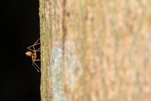 Red ant on a tree