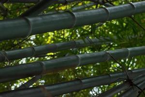 árboles y hojas de bambú foto