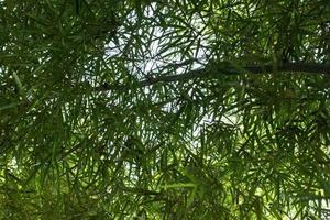 árboles y hojas de bambú