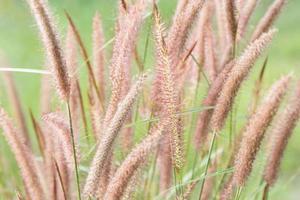 Grass flowers close-up photo