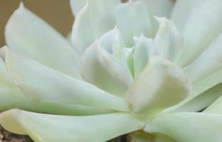 primer plano de cactus verde