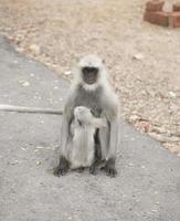 Monkeys on sidewalk