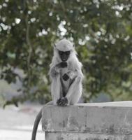 Monkey on concrete