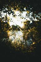 flores verdes en un río foto