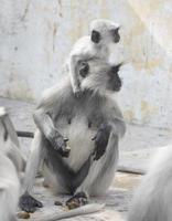 madre y bebé mono