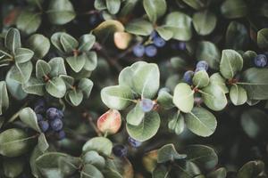 planta de hojas verdes foto