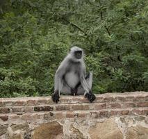 Monkey on a wall photo