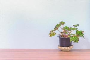 Flower pot on the desk photo