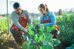 Couple examining a broccoli plant in a cultivated field