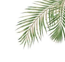 Palm leaves on white background photo