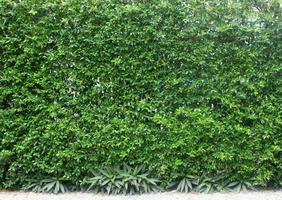 Planta de hojas verdes verticales en la pared