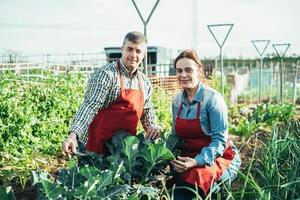 Farming couple behind a broccoli plant in an organic field