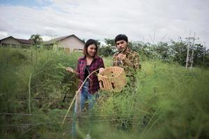 Pareja joven agricultor cosechando espárragos frescos