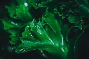fondo de hojas verdes foto