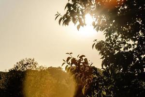 Green leaf tree during daytime photo