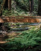 puente de madera marrón sobre el río foto