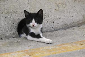 Kitten lying in a concrete wall hole