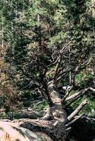 árboles verdes y marrones durante el día foto