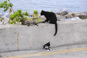Group of cats resting by the seaside