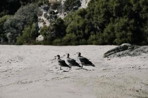 White and black birds on gray sand during daytime photo
