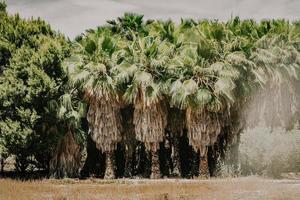Planta verde y marrón en campo marrón durante el día foto