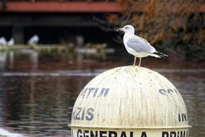 Seagull standing on a spherical buoy in the middle of the lake
