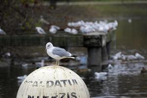 Seagull standing on a spherical buoy on lake
