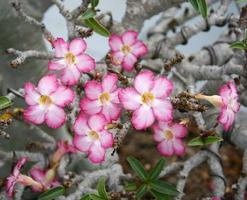 Pink flowers in a garden outside photo