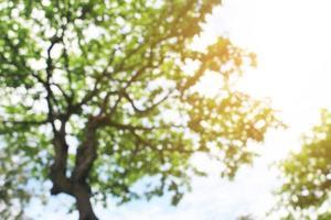 Copie el espacio de la naturaleza verde bokeh sol luz llamarada y desenfoque de fondo de textura abstracta de rama de hoja foto