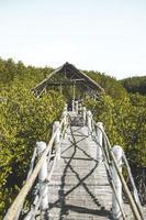Bantayan Island, Philippines, 2020 - Mangrove Park Bantayan Island photo